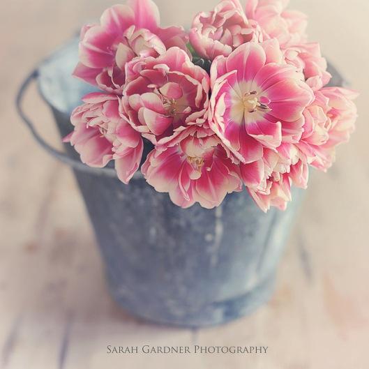 Beautiful romantic tulips